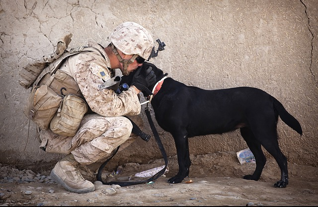 Military soldier in a desert petting a Labrador dog